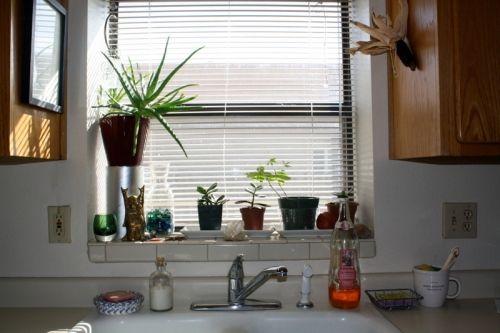 Làm đẹp cửa sổ với chậu cây