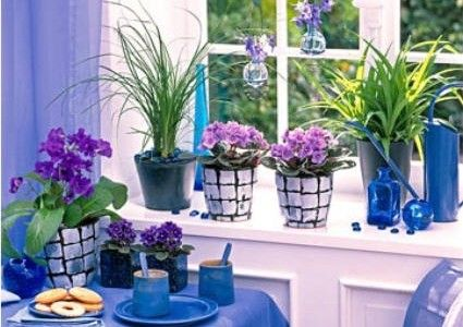 Làm đẹp cửa sổ với cây và hoa