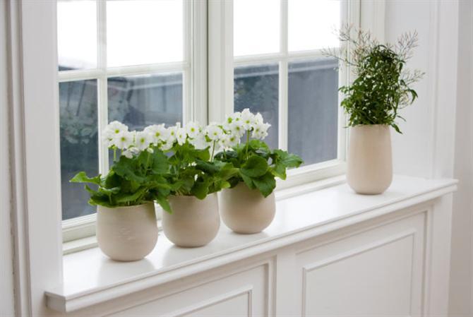 Làm đẹp cửa sổ với hoa và cây