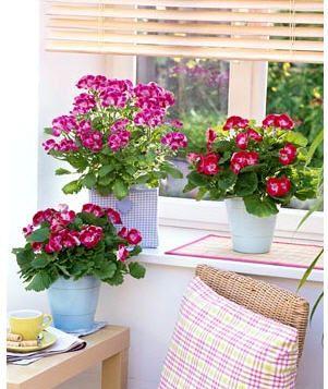 Làm đẹp cửa sổ với chậu hoa và cây