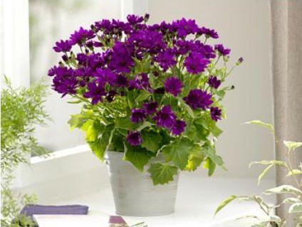 Làm đẹp cửa sổ với hoa